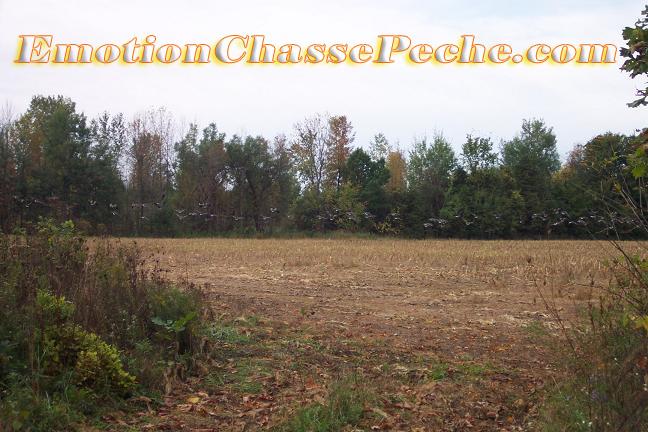Comment trouver un terrain de chasse - Comment connaitre proprietaire terrain ...