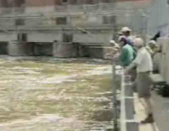 alose pêche au quai