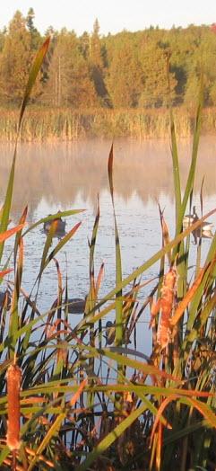 Liste des articles à apporter pour la chasse aux canards au marais