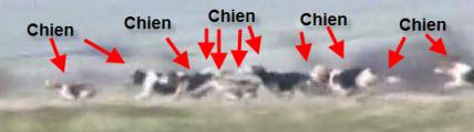 Vidéo de chasse à courre au lièvre
