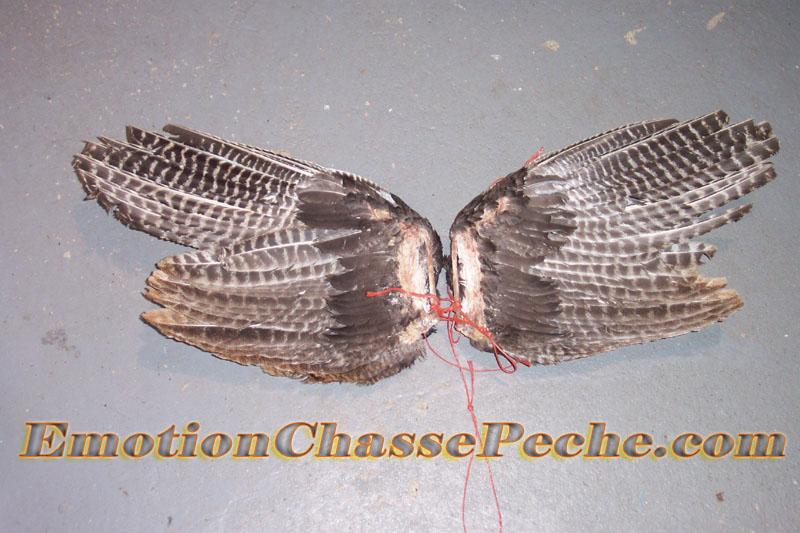 Attacher les deux ailes de dindon sauvage