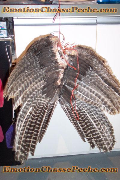 Suspendez votre duo d'ailes de dindon sauvage dans un endroit frais et sec