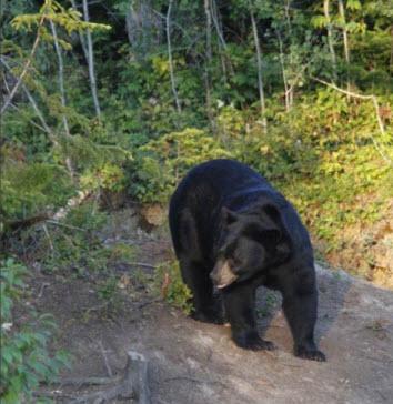 Histoire de chasse à l'ours