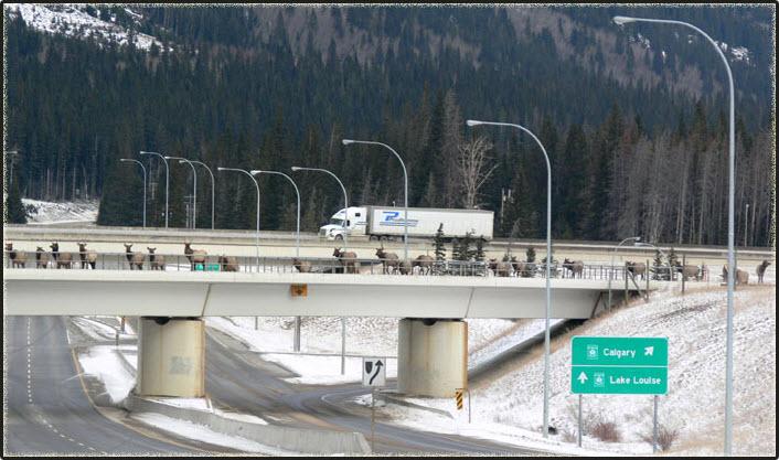 Pont pour Caribou