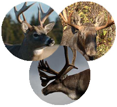 Tirage au sort de la saison de chasse 2010