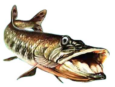 Vision des poissons