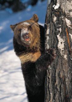 Joke sur les ours