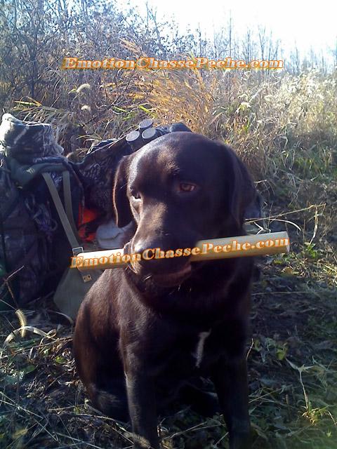 Dresser son chien de chasse