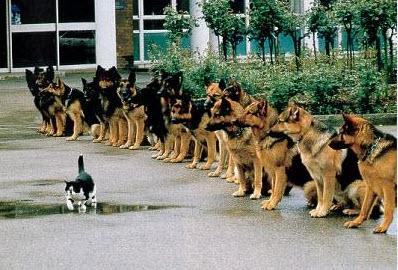 test d'entraînement de chien de chasse...